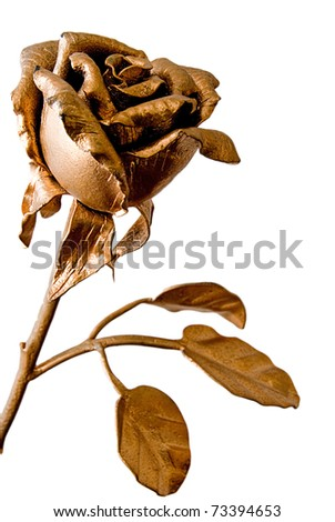 The photo of beautiful iron rose on white background