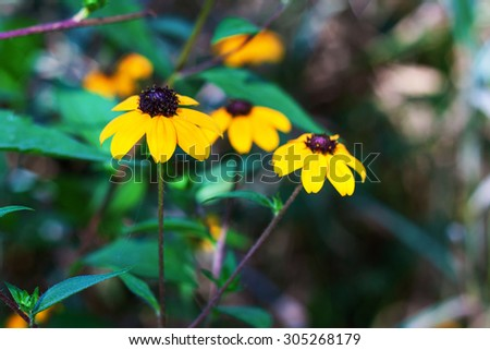 The picture shows a beautiful and delicate wildflower - stock photo