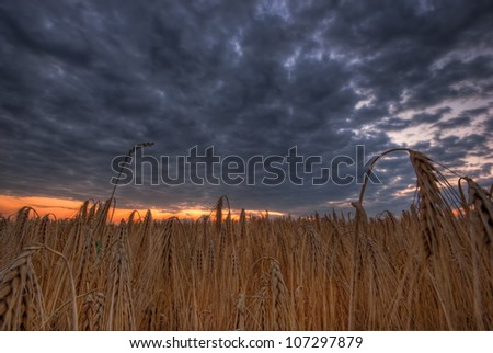 The picture shows a field and a cloudy sky. - stock photo