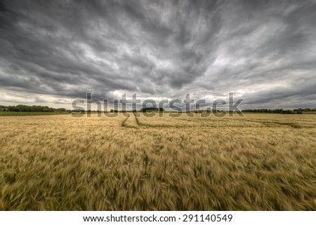 The picture shows a field and an approaching storm.