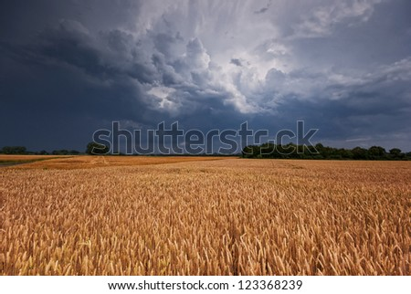 The picture shows a grainfield and a gathering Storm. - stock photo