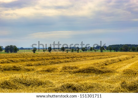 The picture shows a mowed field. - stock photo