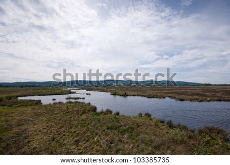 The picture shows a peat bog. - stock photo