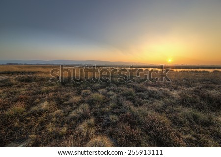 The picture shows a peat bog at sunset. - stock photo