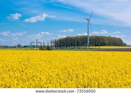 The picture shows a rapeseed field and a wind turbine.