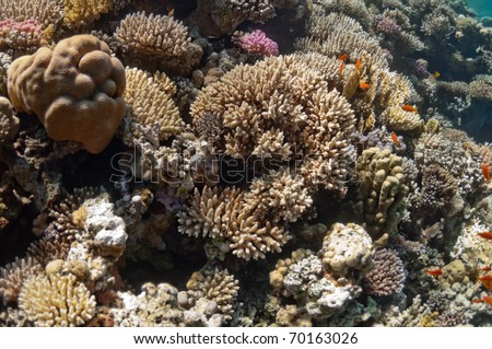 Tropical Fish Corals Sponges Around Thriving Stock Photo ...