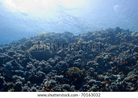 The picture shows the Red Sea coral reef near the city of Dahab, Egypt. There are different types of corals and fishes there. - stock photo