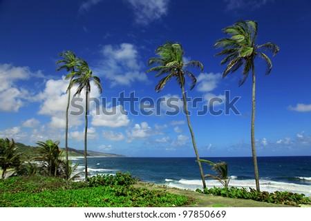 the picturesque atlantic coastline of Bathsheba in Barbados - stock photo