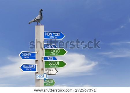 The pigeon bird on the pole of country direction sign.