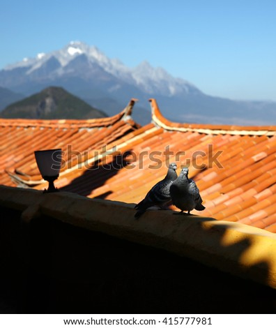 The pigeons on the roof tile   - stock photo