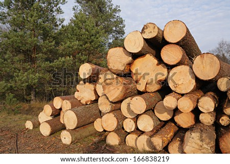 The pile of pine lumber in a forest - stock photo