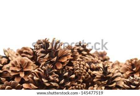 The Pine cones - stock photo