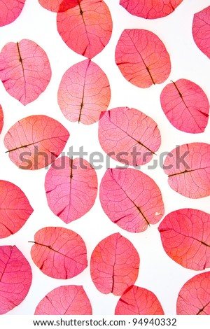 The pink flower petals, red on a white background. - stock photo