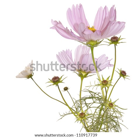 The pink flowers garden border with space - stock photo
