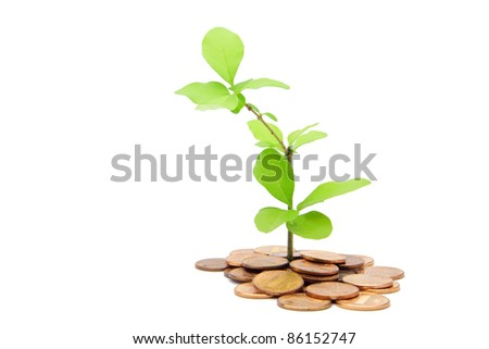 the plant growing through and 1 cent coins - stock photo
