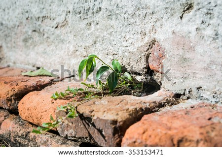 The plant growing up at the wall cracks - stock photo