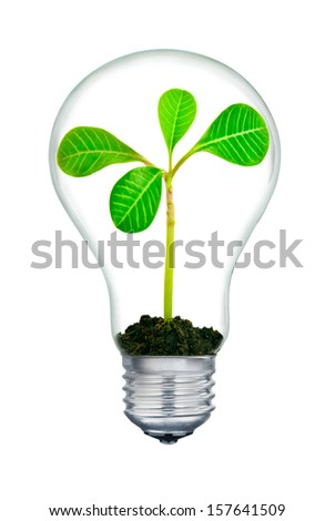 The plant inside the light-bulb,isolated on white background. - stock photo