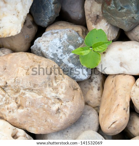 The plant is among the pebbles - stock photo