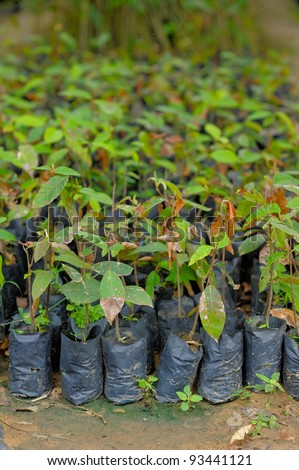 The planting of trees. - stock photo