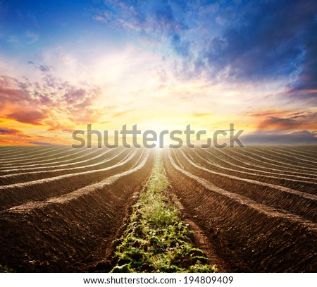 The plowed field in the sunset - stock photo