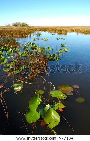 The pond at Everglades - stock photo