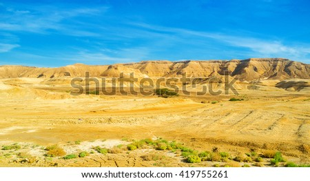 The poor vegetation of Negev desert, the hot and dry region of Israel.