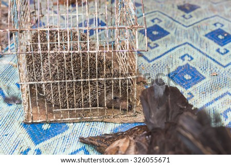 The porcupine in the cage wait for sell in the fresh market of medina in Fes, Morocco - stock photo