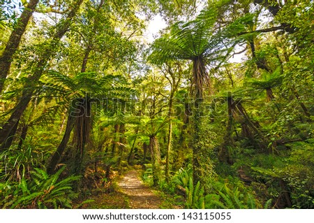 The Pororari Track in Paparoa National Park In New Zealand