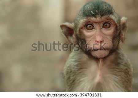 The portrait monkey very cute mammal. at Thailand