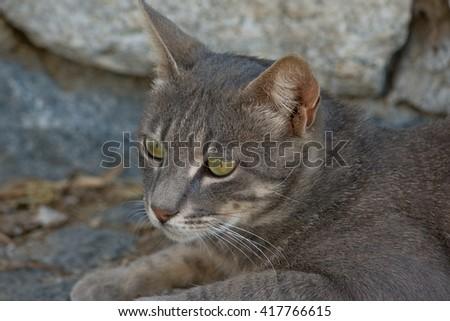 The portrait of cat in the dark area - Selective focus - stock photo