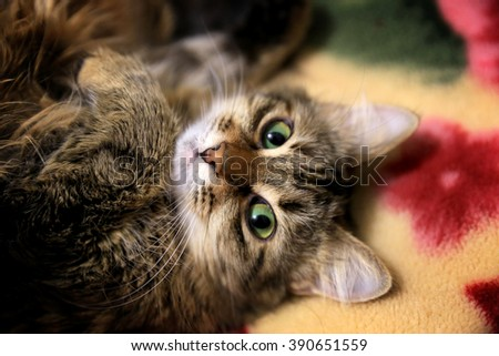 the portrait of funny cat - stock photo