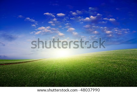 The potato in the field blossoms - stock photo