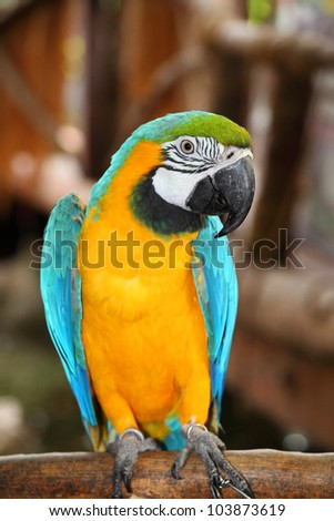 The potrait of Blue & Gold Macaw - stock photo