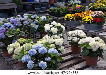 The pots with flowers standing on pallets after a court yard of the house