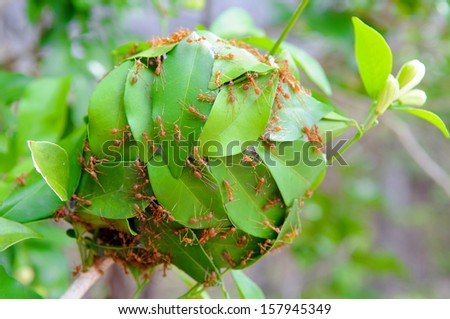 The power of ants for build their house - Stock Image - stock photo