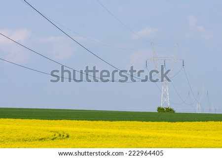 The powerlines at the large colza field - stock photo