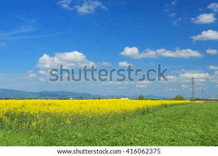 The powerlines on the yellow rape field