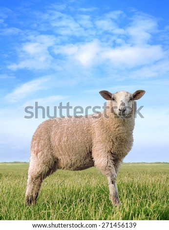 The pretty sheep, digital image processing from photo. - stock photo