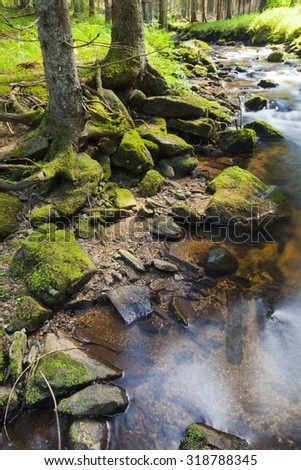 The primeval forest with grass on ground and the creek - stock photo