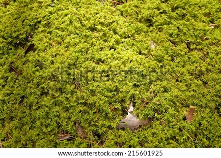 The primeval forest with mossed ground - stock photo