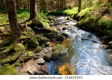 The primeval forest with mossed ground and the creek - HDR