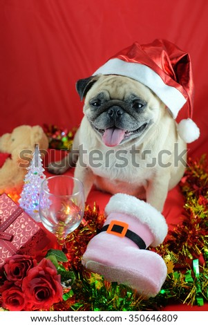 The pug dog wearing santa hat waiting for Chris-mas party.