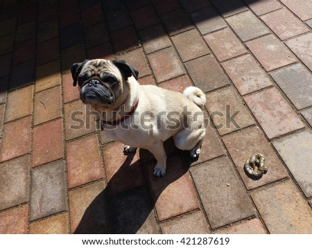 The pug has made his business