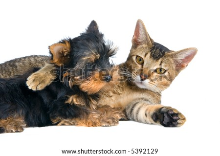 The puppy and kitten - stock photo