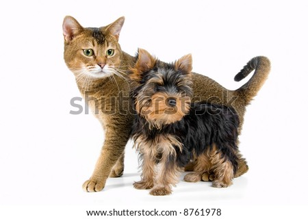 The puppy and kitten in studio - stock photo