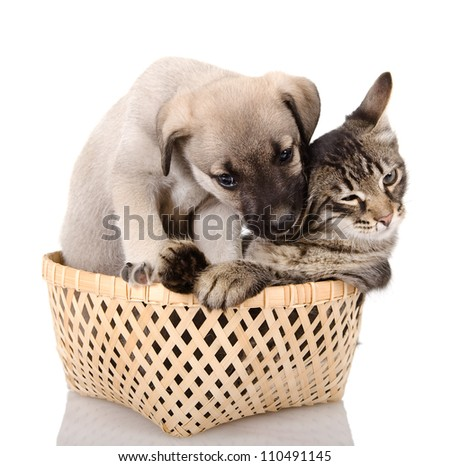 the puppy bites a kitten. isolated on white background - stock photo