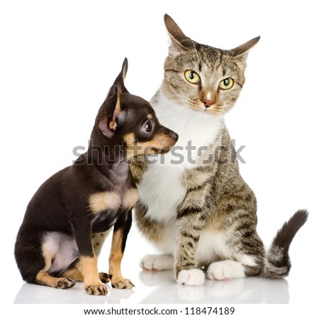 the puppy dog and cat. isolated on white background - stock photo