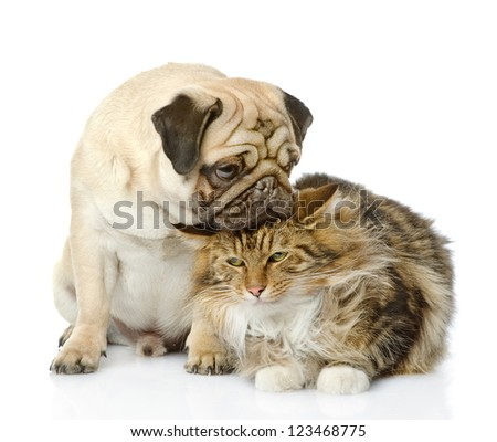 the puppy kisses a cat. isolated on white background - stock photo