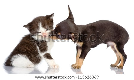 the puppy kisses a kitten. Isolated on a white background - stock photo