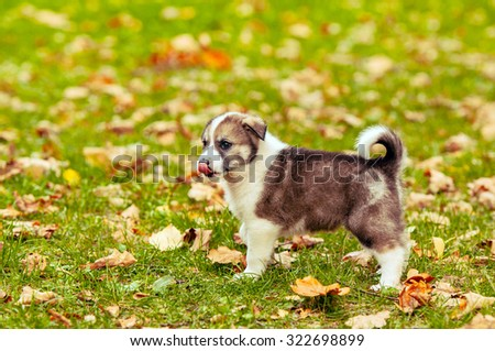 The puppy licked - stock photo